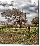 Wind Swept Kansas Tree Acrylic Print