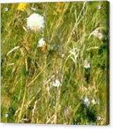 Wind Through The Meadow Acrylic Print