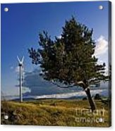 Wind Turbine And Tree On The Plateau Of  Cezallier. Auvergne. France. Acrylic Print
