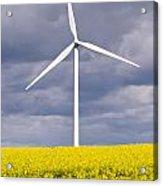 Wind Turbine With Rapeseed Acrylic Print