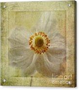 Windflower Textures Acrylic Print