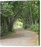 Winding Country Road Acrylic Print