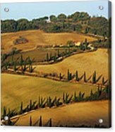 Winding Road And Cypress Trees In Tuscany 1 Acrylic Print