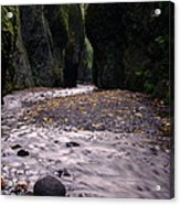 Winding Through Oneonta  Gorge Acrylic Print