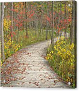 Winding Woods Walk Acrylic Print