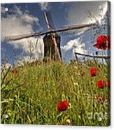Windmill Poppies  Acrylic Print