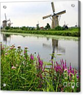 Windmills Of Kinderdijk With Wildflowers Acrylic Print by Carol Groenen