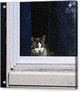 Window Cat Acrylic Print