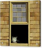 Window Cat    No. 2 Acrylic Print