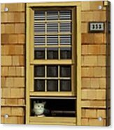 Window Cat    No.1 Acrylic Print