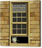 Window Cat    No.4 Acrylic Print