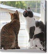 Window Cats Acrylic Print