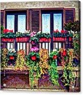 Window Flower Acrylic Print