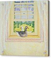 Window Geese Acrylic Print