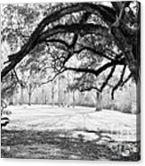 Window Oak - Bw Acrylic Print