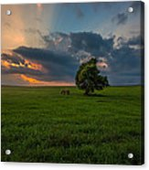 Windows Sd Acrylic Print