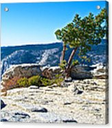 Windswept Tree On Top Of Sentinel Dome In Yosemite Np-ca Acrylic Print