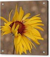 Windy Flower Acrylic Print