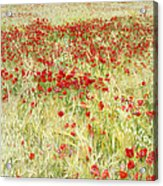 Windy Poppies At The Fields Acrylic Print