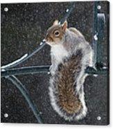 Windy Winter Day Acrylic Print