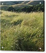Wine Country Hills Acrylic Print