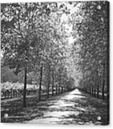 Wine Country Napa Black And White Acrylic Print by Suzanne Gaff