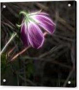 Wine Cup Wildflower Acrylic Print
