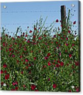 Wine Cups And Barbed Wire Acrylic Print