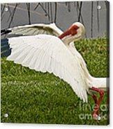 Wing Breaks Acrylic Print