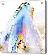 Wing Dream Acrylic Print by Fran Riley