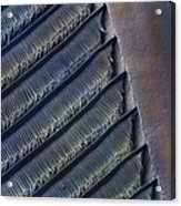 Wing Feather Detail Of Swallow Sem Acrylic Print