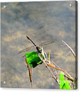 Winged Critter Acrylic Print