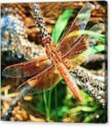 Winged Wonder Acrylic Print