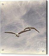 Wingman Acrylic Print