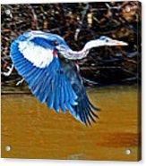 Wings In Flight Acrylic Print