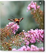 Wings In The Flowers Acrylic Print