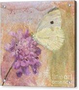 Wings Of Beauty Acrylic Print