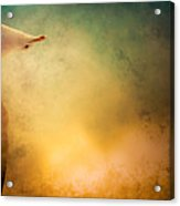 Wings Of Freedom Acrylic Print by Loriental Photography