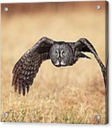 Wings Of Motion Acrylic Print