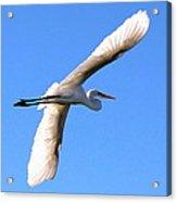 Wings On High Acrylic Print