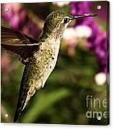 Wings Out Of The Way Acrylic Print