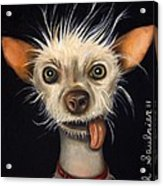 Winner Of The Ugly Dog Contest 2011 Acrylic Print