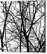 Winter 15 Acrylic Print