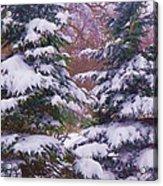 Winter  5 Acrylic Print