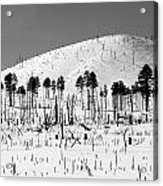 Winter After Fire-san Francisco Peaks Acrylic Print