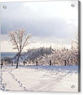 Winter At Scarborough Bluffs Acrylic Print