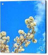 Winter Beauty Hdr Acrylic Print