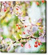 Winter Berries Acrylic Print