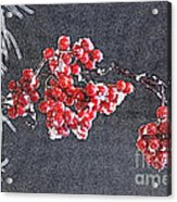 Winter Berries II Acrylic Print