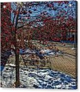 Winter Berries Acrylic Print by Baywest Imaging